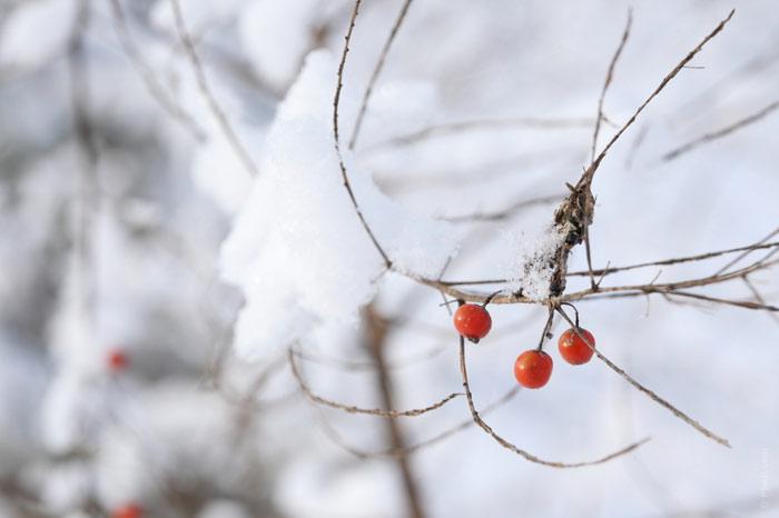 700-winter-snow-cold